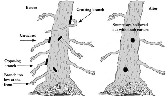 Branch pruning