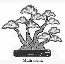 Multi trunk
