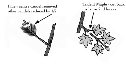 pruning.1