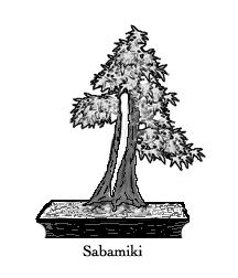 Sabamiki blog