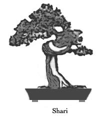 Shari blog