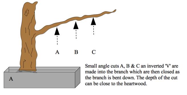 conifer-wiring-a
