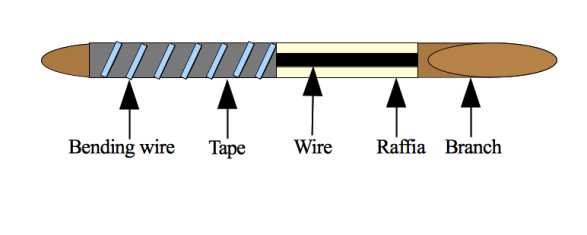conifer-wiring-c