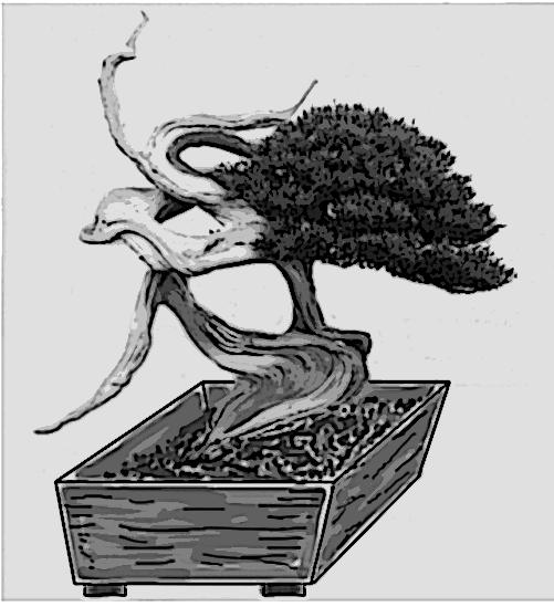 Bizarre bonsai