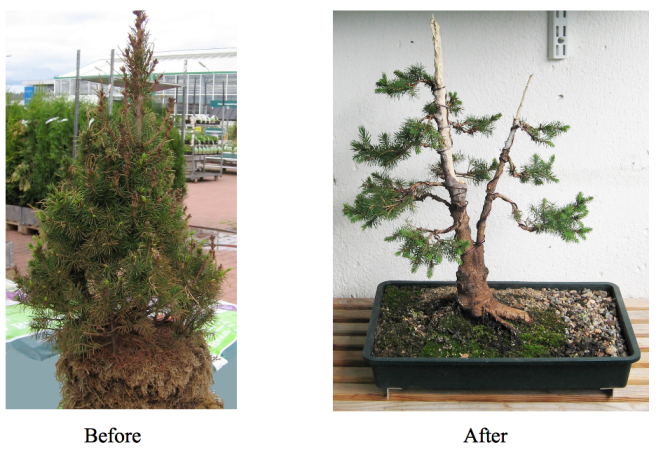 Picea before & after