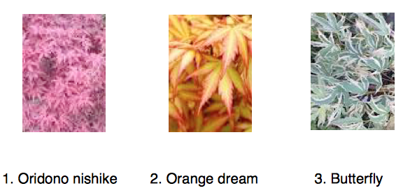 Oridono,orange,butterfly