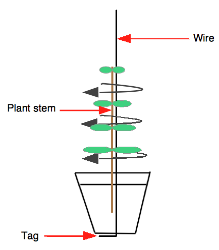 Wiring a sapling